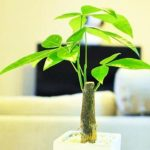 【おすすめ観葉植物】風水インテリアをとりいれて金運,仕事運,恋愛運をアップ!人気ランキング