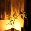 【おすすめ観葉植物】素人でも育てやすい観葉植物!モテるかっこいいイケメンが住むおしゃれでエロいヤリ部屋インテリア!セクシー間接照明!